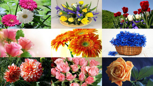 Beauty of Flowers 3