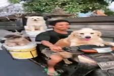 Mit den Hunden unterwegs