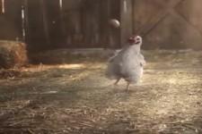 EM der Hühner