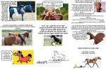 Das-größte-Glück-der-Erde-liegt-auf-dem-Rücken-der-Pferde.pps auf www.funpot.net