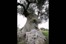 Lustig- kuriose Bäume