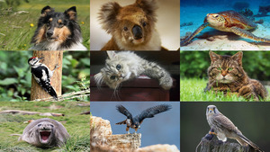 Animals 9