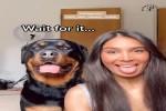 Lustiges-Spiel-mit-dem-Hund.mp4 auf www.funpot.net