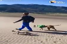 Mit den Haustieren unterwegs