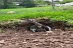 Neugieriges-Kätzchen.mp4 auf www.funpot.net