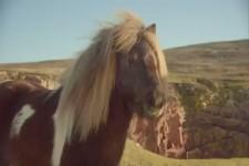 Lustiger Pony-Tanz