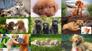 Niedliche Hunde