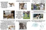 Auf-den-Hund-gekommen-neu.pps auf www.funpot.net