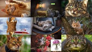 Allzeit beliebte Katzenbilder