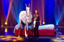 Pferde-Show