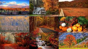 Beautiful Autumn 12