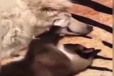 Tiere sind lieb
